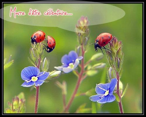 Jolie carte com f te du jour for Images du printemps gratuites