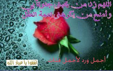 wareda mo3abira